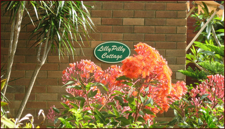 Lillypilly - Accommodation Sunshine Coast