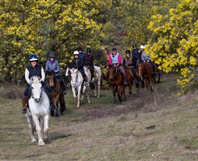 Burnelee Excursions on Horseback - Accommodation Sunshine Coast