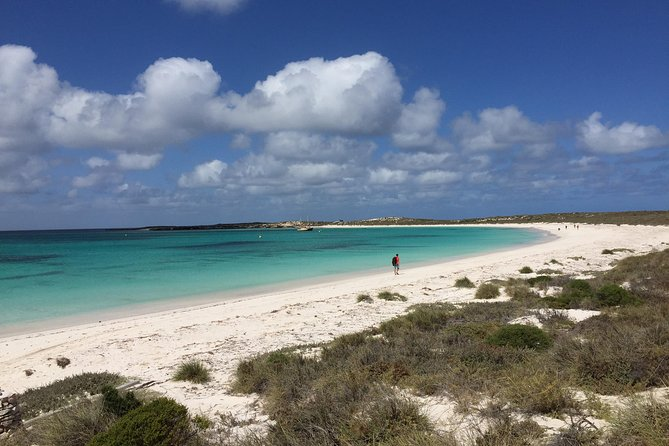 Abrolhos Island Half Day Fly and Flipper - Accommodation Sunshine Coast